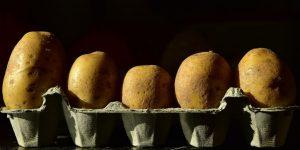 pomme de terre dans boîte à oeufs