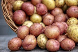quand_ramasser_pommes_de_terre2