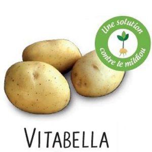 la vitabella une pomme de terre résistante au mildiou