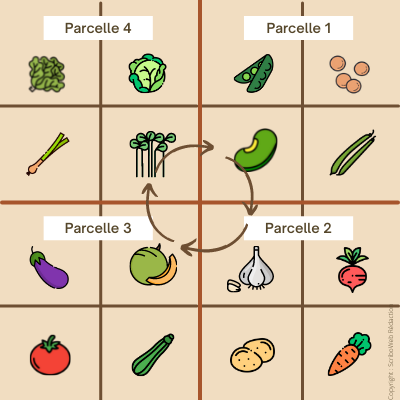 tableau de rotation des cultures avec sous parcelles en carré