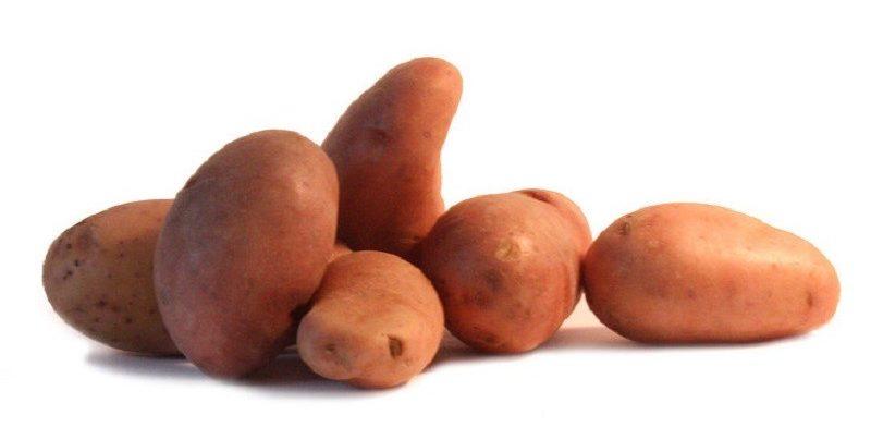 six pommes de terre variété Jeannette