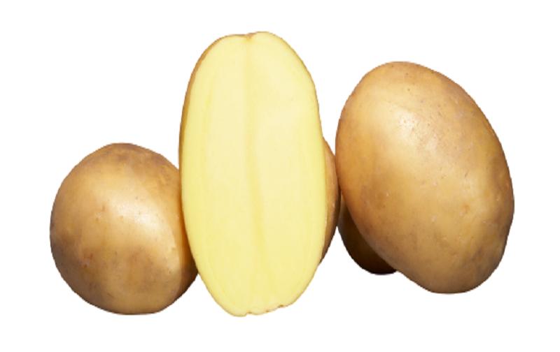 trois pommes de terre dont une coupée en deux variété Osiris